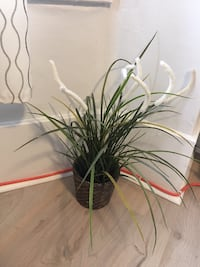 FAKE PLANTS WITH VASE **VARIOUS ITEMS** VANCOUVER