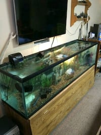 125 gallon aquarium Des Moines, 50315