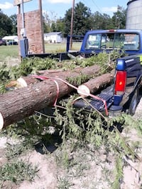 Tree removal Summerville
