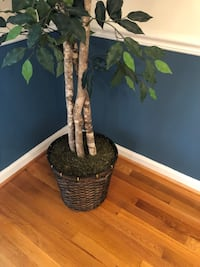 7 Foot Silk Ficus Tree  Inhouse Plant 7ft Artificial Tree Faux.   Silver Spring, 20906