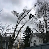 40% off tree removal Edmonton