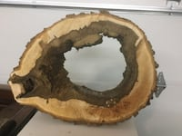 Hollow black walnut tree slice Reminderville, 44202