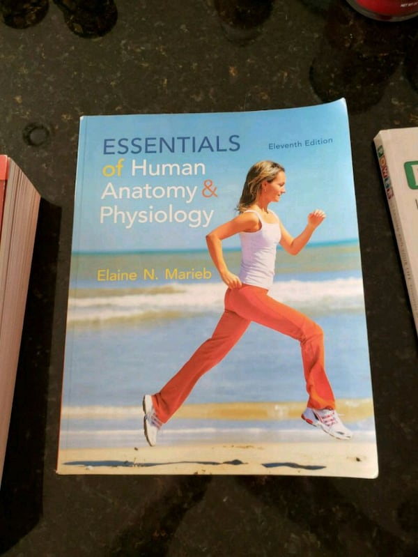Essential of human anatomy and physiology 547c0556-aa14-4c78-8202-b5c6019c352f