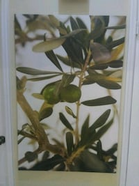 green leaf plant poster Lithonia, 30058