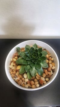 Succulent in ceramic bowl New Westminster, V3M 1A6