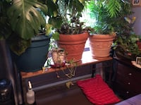 Plants in good pots all different prices Andover, 07821