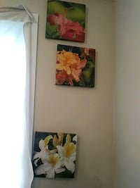 hibiscus, lily, and lily of Incas flowers photo Gatineau, J8T 2W6