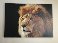 Beautiful Lion wall picture
