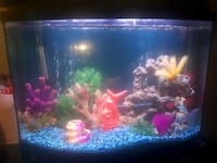 38 gallon fish tank (fully loaded)  Kitchener, N2N 2A9