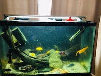 40 Gallon tank with Cichlids.