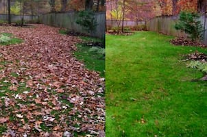 Leaf blowing & removal
