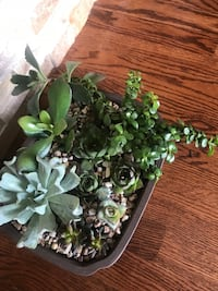 Air purifying succulents in the new bonzai pot