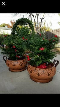 two clay potted green plants screenshot