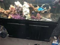 75 gallon fish tank and accessories Suitland, 20746