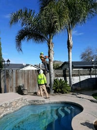 PALM TREE TRIMMING SAME DAY SERVICE