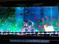 Fish tank, everything included Hagerstown, 21742