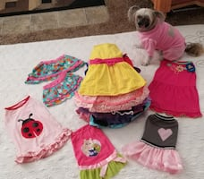 240 Designer Doggy Clothes,  Plus  Additional Accessories