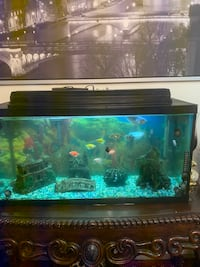 Fish tank for sale $250 Coquitlam, V3K 4P7