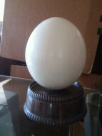 Ostrich egg (hollowed out)with custom display case Phoenix, 85028