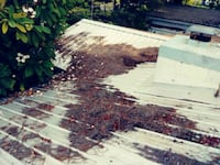roof cleaning and repairs Lakeland, 33813