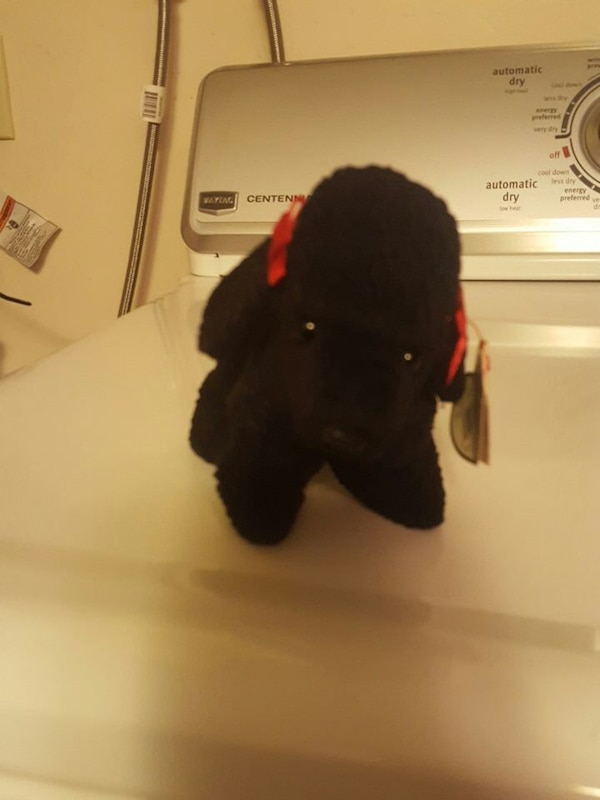 Used ty beanie baby gigi for sale in Connecticut - letgo a853506592b