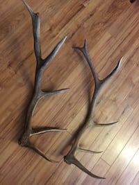 2 elk shed antlers 6 points from out west Bluemont, 20135