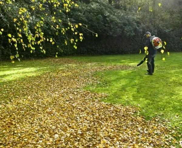 Leaf cleanup/ removal