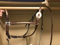 Leather halter and lead  London, N5Y 2H2