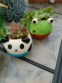 Succulents in small fun pots *FROG ONLY AVAILABLE  San Jose, 95127