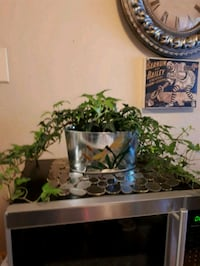 A variety of House plants $8 - $20 London, N5Y 4L1