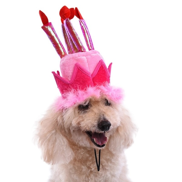 Gebrauchte Birthday Hat For Dog Or Cat Zum Verkauf In Fair Oaks