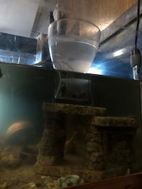 Fish tank 45 gallon CAD100 only