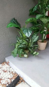 green plant in brown pot New Port Richey, 34653