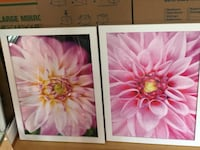 Set of 2 pink floral framed pictures  Baltimore, 21206