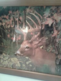 Three  Framed Deer Photos