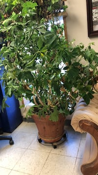 green leafed plant with brown pot Red Deer, T4P