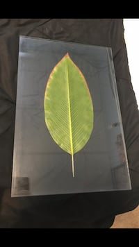 """Leaf Picture. Outside of Frame broke.  Otherwise Ex Cond. 12"""" x 18"""""""