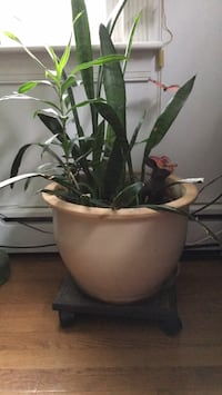 Plant  with ceramic po East Patchogue, 11772