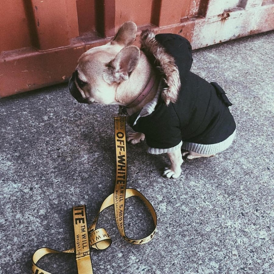 Dog collar and leashes
