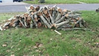 Sycamore Logs Akron, 44319