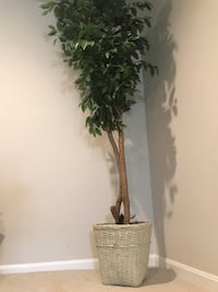 Artificial Ficus Silk Tree, 7ft, Green Herndon