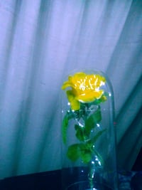 Tale as old as time light up rose