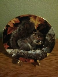 Our Woodland Friends - Gray Squirrel Lacey, 98503