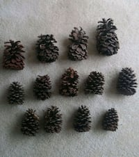 Natural Rustic Pine Cones/Lot Of 35/Assorted  Gaithersburg