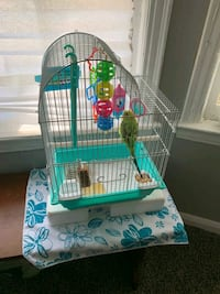 bird for sale come with everything food and cage  Southfield