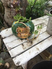 Succulent in Owl planter