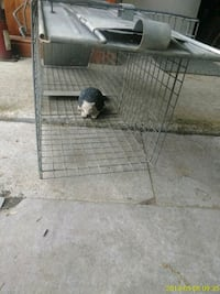 gray metal wire pet kennel Hyattsville, 20782