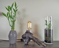 Hand Made Driftwood Desk Lamp Sidney