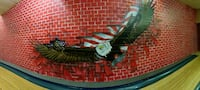 bald eagle wall decor in panoramic photography Ames, 50014