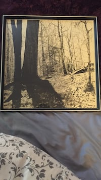 sepia photography of trees with wooden frame Findlay, 15126